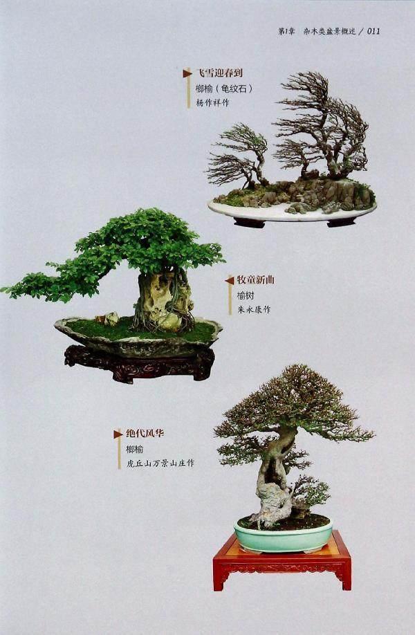 园林中杂木类盆景的现状与发展的探讨