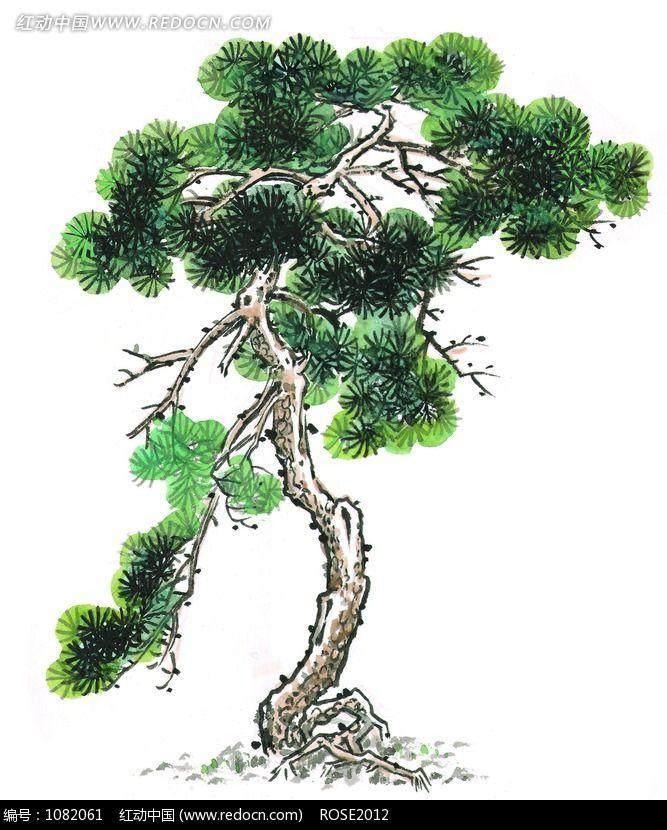 盆景树干被虫子打洞怎么预防?