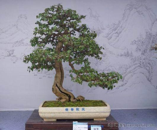 扬州获得国际盆景大会暨国际盆栽协会成立50周年庆典举办权
