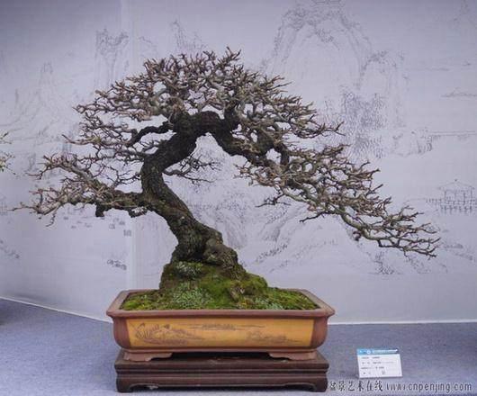 2013国际盆景大会将于4月18日至4月20日在扬州举行