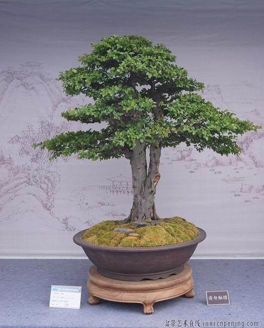 2013年国际盆景大会扬州开幕