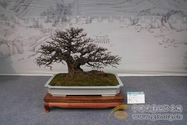在2013中国·扬州旅游节暨国际盆景大会开幕式上的致辞