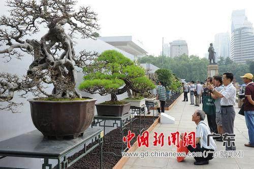 2015国际盆景大会暨亚太盆景赏石大会在穗揭幕