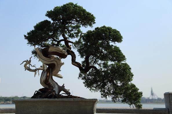 江苏:花盆破了别扔 有创意就能做成盆景