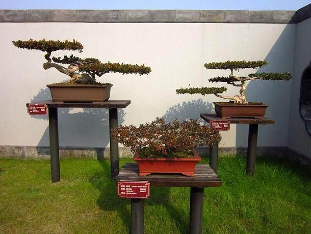 苏州花卉盆景展