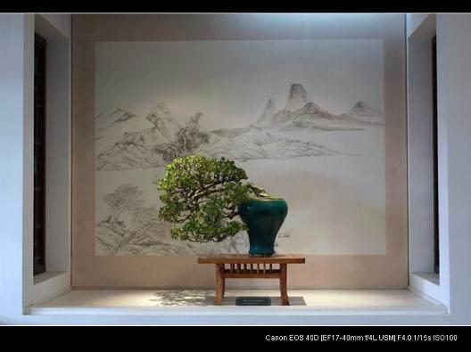 苏州盆景艺术的发展得天独厚 太湖石玲珑剔透