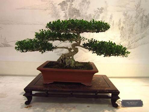 苏州网售花木盆景销往全国各地