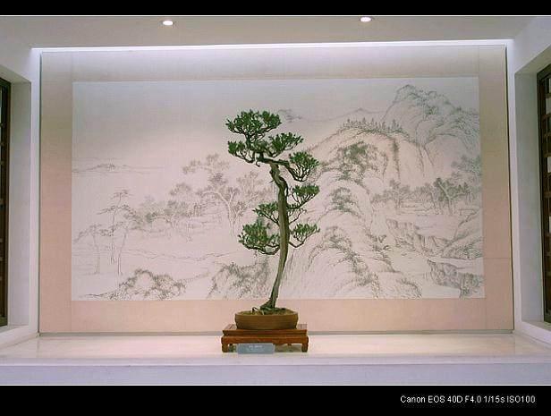 苏州第五届中国盆景评比展