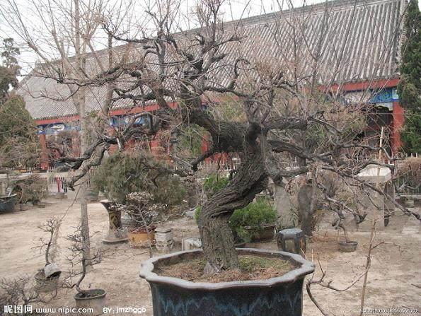 江苏如皋举行第七届中国(如皋)花木盆景艺术节