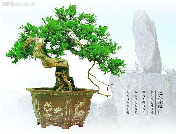 第七届世界盆景大会江苏开幕