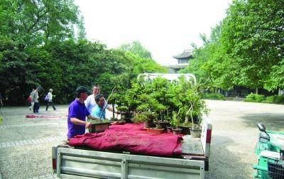 江苏:镇江老人捐40盆盆景给焦山公园 市场估价近20万