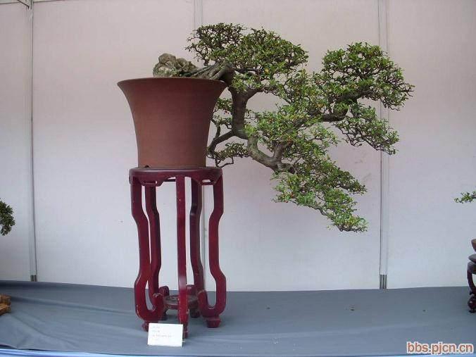第七届中国盆景展览会在南京玄武湖开幕