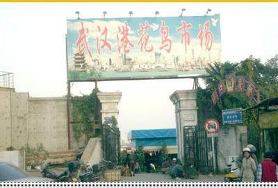 武汉花鸟市场黑幕:激素为盆景增色截枝充无根栽培