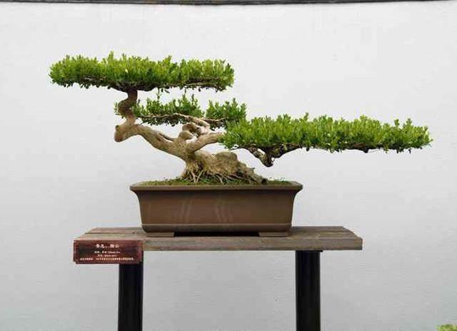 中国扬州盆景艺术旅游节隆重开幕