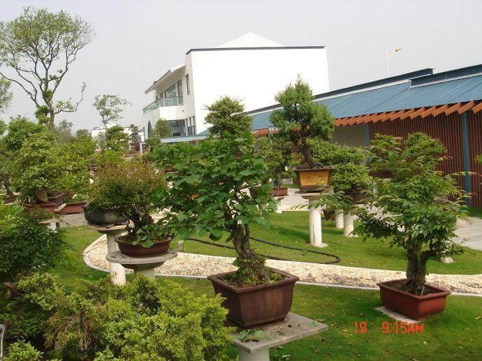 中国花卉协会盆景分会在如皋设立秘书处