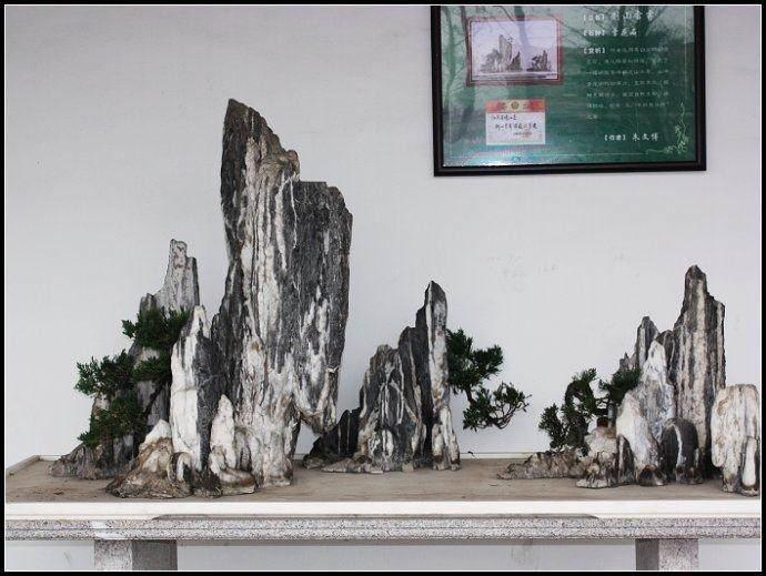 新沂市举办盆景展会