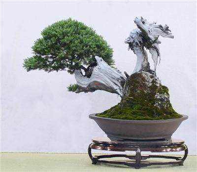 观赏胡乐国的盆景作品