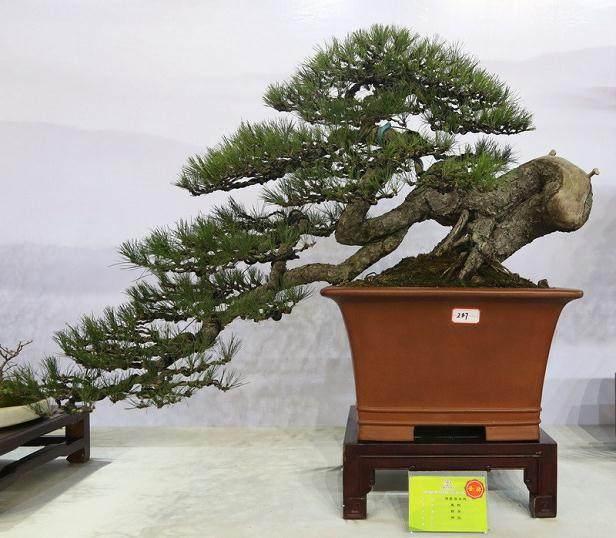 湖南东安县举办第四届花卉盆景享石展览
