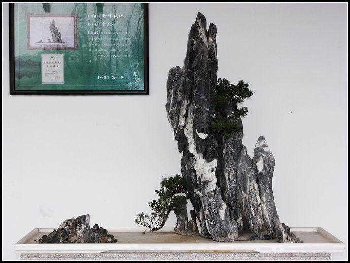 """万景山庄赏""""飞流直下"""" 靖江上海盆景高手助力虎丘盆景园"""