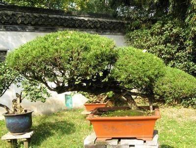 连云港赣榆县政协领导考察如皋市花木盆景产业
