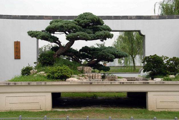 苏东坡与扬州盆景