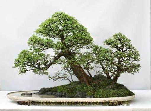 扬州附近在哪里有花卉盆景的批发?