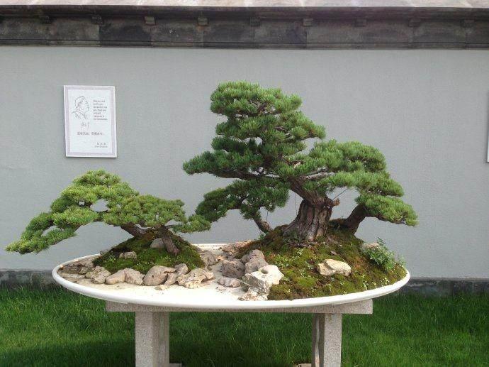 扬州盆景园正式开放