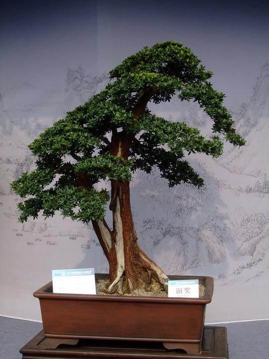 扬州盆景研究所揭牌