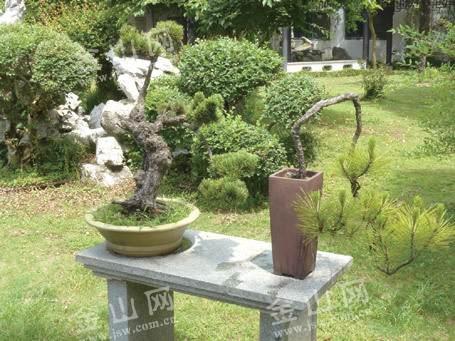 镇江八旬老职工向焦山公园捐献多年珍藏盆景