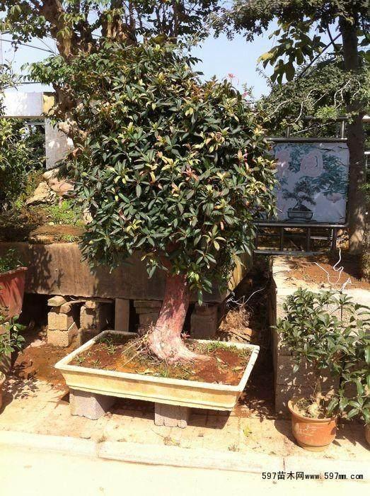 第二期中国盆景高级研修班在宿迁市沭阳县开班