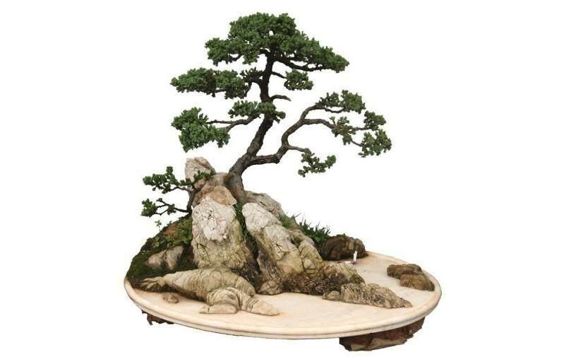 贺淦荪论树石盆景(二)