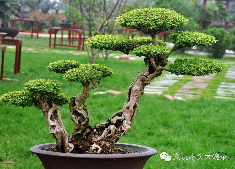 盆景名家-胡乐国