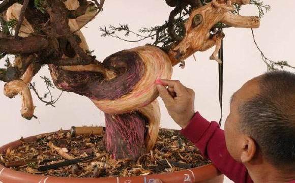柏树盆景怎么丝雕的技艺研讨会