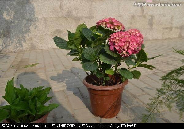 五一期间 北京今年盆栽花继续走俏市场