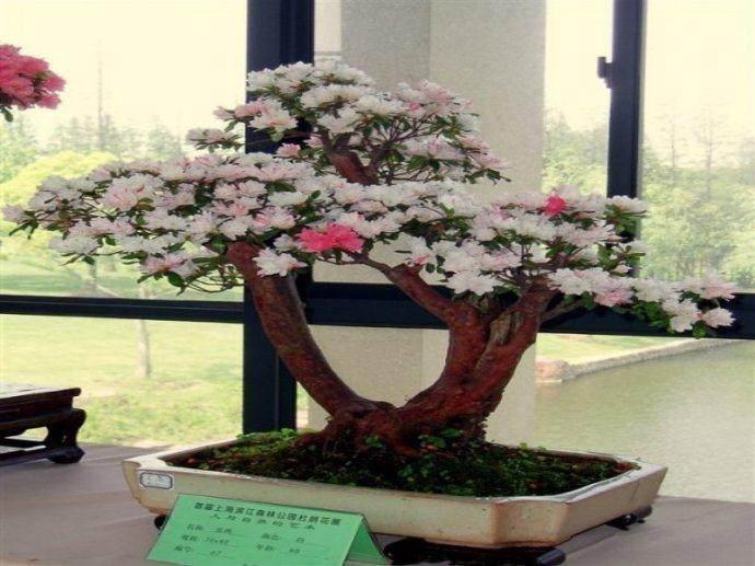 福建省宁德市绿化苗木花卉盆景公司