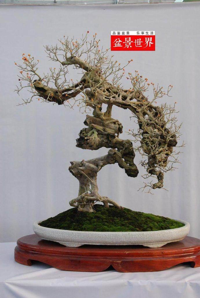 广东省盆景协会庆祝成立十五周年