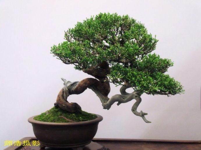 苏派盆景技艺被列入国家非物质文化遗产