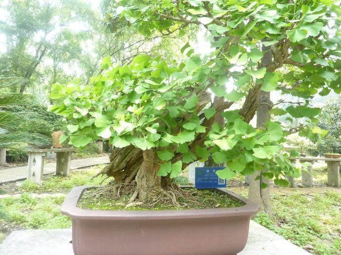 旧物改造之绿植小盆景的做法