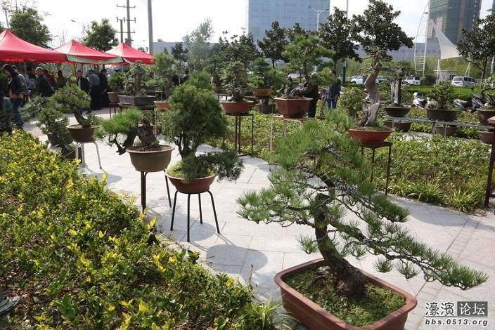 如皋盆景被中国盆景协会考订为全国盆景艺术七大流派之一