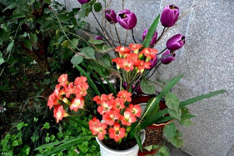 首届国际盆景花卉世界