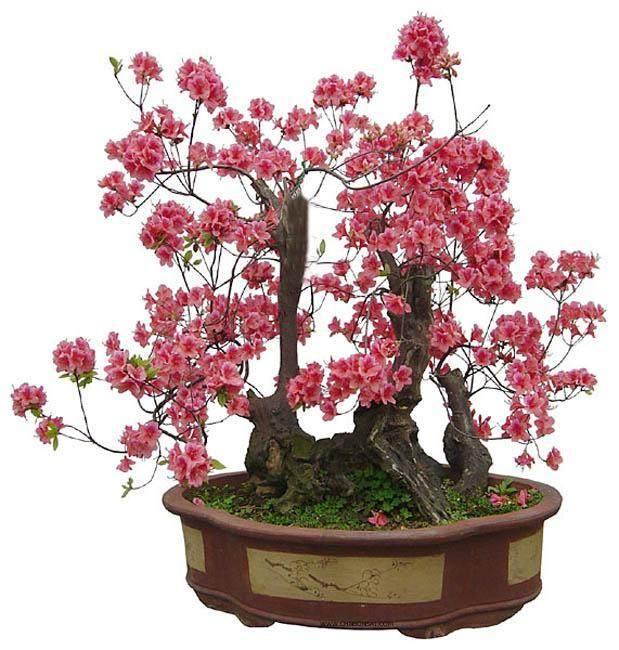 保康县花卉盆景已获国家级大奖