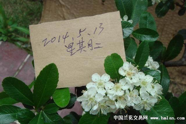 近70名花卉爱好者捧出110余盆盆景参展