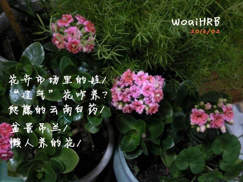 第六届福建省花卉盆景博览会