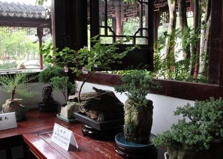 石栽盆景——自然美与艺术美的统一3