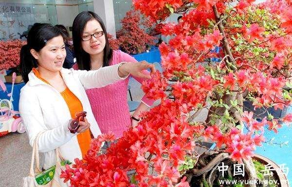 贵阳市获国际盆景大会主办权