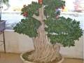福建:传奇榕树盆景新装上市