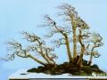 「树石盆景」风格及树石盆景人
