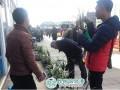 第三届云南新益洲兰花盆景展在云南新益洲花鸟市场启幕