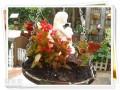 高压锅锅盖怎么DIY制作花盆盆景的方法