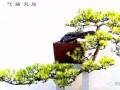 读《韩学年盆景艺术》有感
